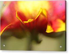 Flower Impressions II Acrylic Print