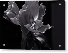 Acrylic Print featuring the photograph Flower In Monotone by Sheryl Thomas
