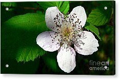 Acrylic Print featuring the photograph Flower In Shadow by Larry Keahey