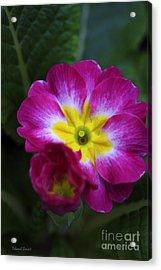 Flower In Spring Acrylic Print by Deborah Benoit