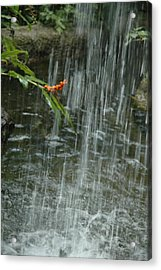 Flower In The Falls Acrylic Print