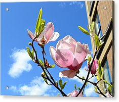 Flower In The Sky Acrylic Print by Patricia  S