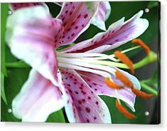 Flower Acrylic Print by Karina Khan