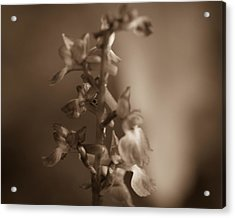Acrylic Print featuring the photograph Flower by Keith Elliott
