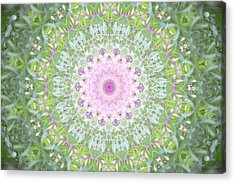 Acrylic Print featuring the photograph Flower Mandala - B by Anthony Rego