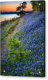 Flower Mound Acrylic Print by Inge Johnsson