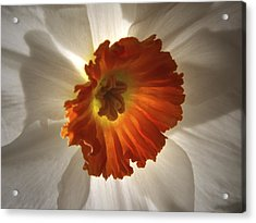 Acrylic Print featuring the photograph Flower Narcissus by Nancy Griswold
