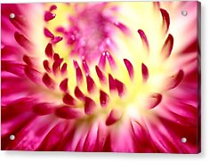 Flower No. 2 Acrylic Print