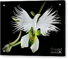 Flower Oddities - Flying White Bird Flower Acrylic Print