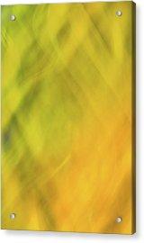 Flower Of Fire 1 Acrylic Print