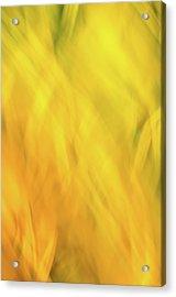 Flower Of Fire 2 Acrylic Print