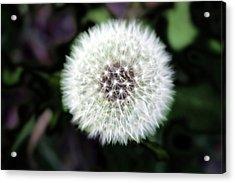 Flower Of Flash Acrylic Print by Mark Ashkenazi