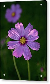 Acrylic Print featuring the photograph Flower Of Love by Dale Kincaid