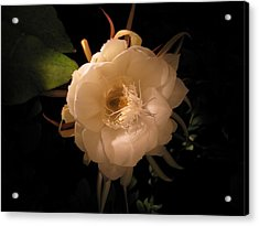 Flower Of The Night 01 Acrylic Print by Andrea Jean