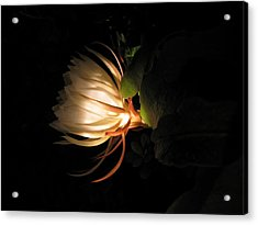 Flower Of The Night 03 Acrylic Print by Andrea Jean