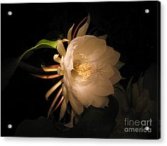 Flower Of The Night 04 Acrylic Print by Andrea Jean