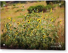 Flower Or Weed? Acrylic Print