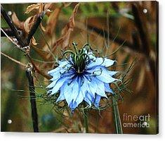 Flower Or Weed Acrylic Print