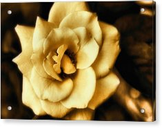 Flower Acrylic Print by Gulf Island Photography and Images
