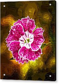 Flower Pop Acrylic Print by Paul Bartoszek