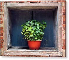 Flower Pot In A Window Acrylic Print
