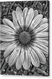 Flower Power - Bw Acrylic Print