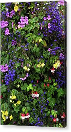 Flower Power Acrylic Print by Kurt Van Wagner