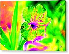 Flower Power Acrylic Print by Peter  McIntosh