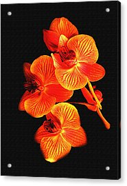 Flower Acrylic Print by Ralph  Perdomo