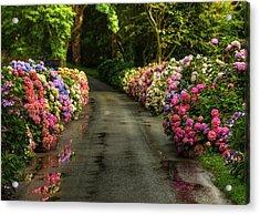 Flower Road Acrylic Print by Svetlana Sewell
