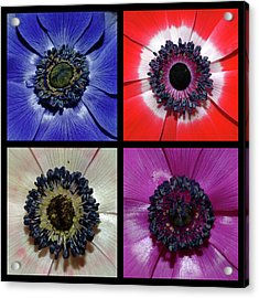 Flower Square Montage - Anemone Acrylic Print