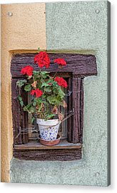 Acrylic Print featuring the photograph Flower Still Life by Alan Toepfer