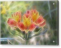 Flower Streaks Acrylic Print