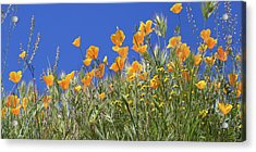 Acrylic Print featuring the photograph Flower Trail Diamond Valley Lake by Cliff Wassmann