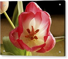 Acrylic Print featuring the photograph Flower Tulip by Nancy Griswold