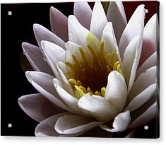 Acrylic Print featuring the photograph Flower Waterlily by Nancy Griswold