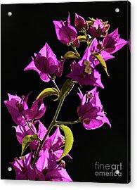 Flower_03 Acrylic Print