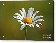 Flowerd Acrylic Print by Olivia Narius