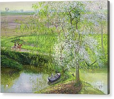 Flowering Apple Tree And Willow Acrylic Print by Timothy Easton