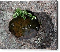 Flowering Bush Acrylic Print