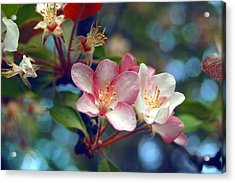 Flowering Crab Acrylic Print