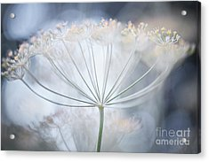 Acrylic Print featuring the photograph Flowering Dill Details by Elena Elisseeva