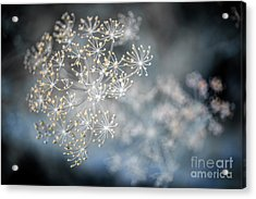 Acrylic Print featuring the photograph Flowering Dill Macro by Elena Elisseeva