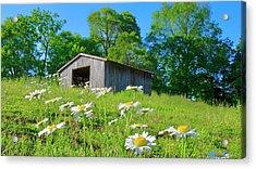 Flowering Hillside Meadow Acrylic Print