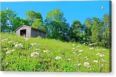 Flowering Hillside Meadow - View 2 Acrylic Print