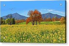 Flowering Meadow, Peaks Of Otter,  Virginia. Acrylic Print