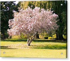 Flowering Tree Acrylic Print by Mark Barclay