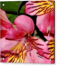Flowers # 8728_1 Acrylic Print