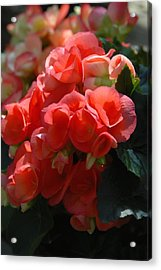 Flowers 160 Acrylic Print by Joyce StJames