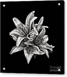 Flowers 8449 Acrylic Print by Walt Foegelle